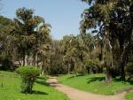 Пальмовая аллея в парке ОШО