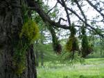 Сушим травы